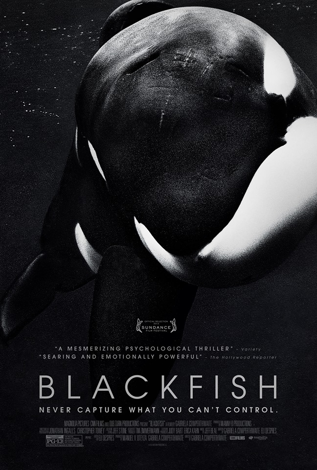 Trailer for 'Blackfish' Explores the Psychosis of Performance Orcas Held in Captivity